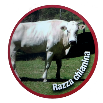 HAMBURGER CRUDI RAZZA CHIANINAGR.230 (PZ.15) KG.3,45 -